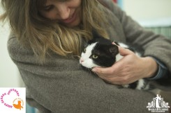 Black and white cat with green eyes being cuddled at a pet adoption event