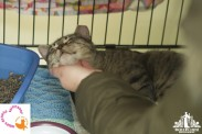 Grey tabby kitten having his chin scratched at a pet adoption event