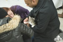 Grey and white cat having its claws trimmed at an adoption event