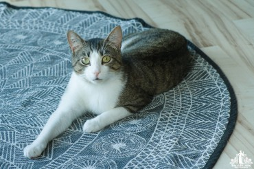 Tabby cat with green eyes lying on a blue and white rug