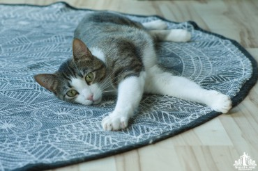 Tabby cat with green eyes stretching out and lounging on a blue and white rug