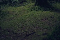 Image of moss covered forest floor