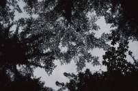 Silhouette of leaves against the night sky
