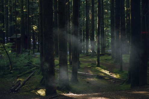 Campfire smoke being illuminated by sunlight through the trees in a forest