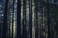 Sunlight filtering through the trees in a forest