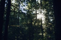 Sunlight shining through the trees in a campground