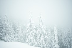 Foggy view from Dog Mountain lookout with snow covered trees in Vancouver, BC