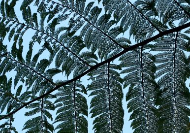 Silhouette of ferns against blue sky