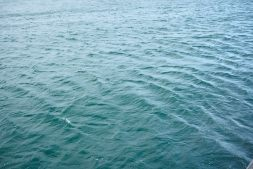 Water being whipped up by the wind in Wellington Harbour