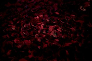 Image of paper poppies with notes written on them at the Gallipoli exhibition at Te Papa Museum in Wellington