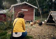 Image of a young woman in a yellow cardigan watching free range chickens at Persephone Brewing Company on the Sunshine Coast, BC