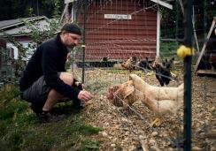 Image of a man feeding grass to free range chickens at Persephone Brewing Company on the Sunshine Coast, BC