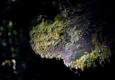 Image of a patch of sunlight illuminating moss on the end of a cut log