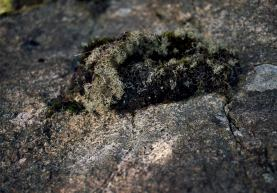 Image of moss growing on a cliff face