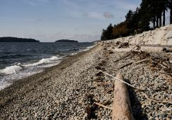 Image of pebble and log strewn beach on a sunny day with the waves lapping the shoreline at Sechelt on the Sunshine Coast, BC